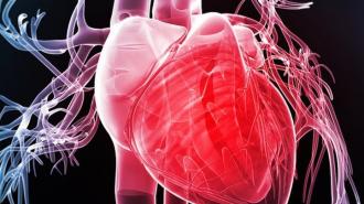 virus viêm cơ tim